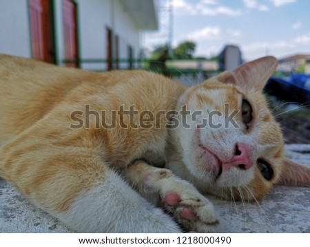 Little cat playful playful playful #1218000490