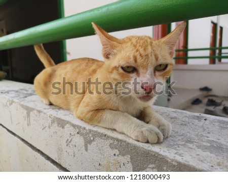 Little cat playful playful playful #1218000493