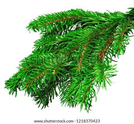 Fir branch isolated on white background #1218370423