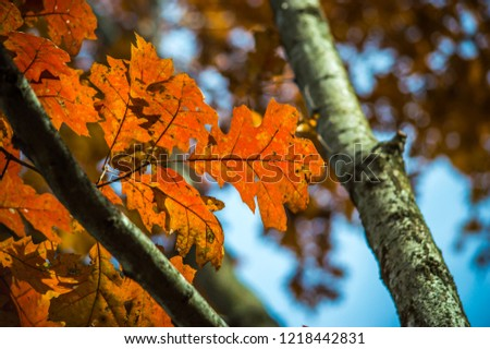 Natural Fall Colors With a Clean Blue Sky #1218442831