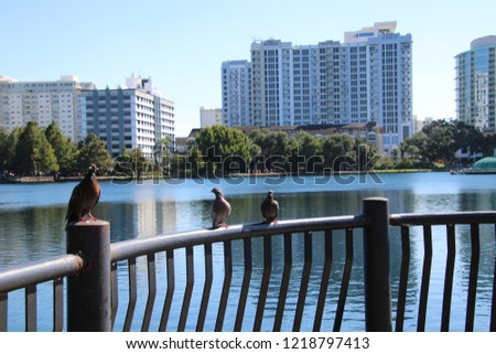 Foreground background perspective photography of pigeon bird perched on black metal railing over turquoise blue reflecting water of downtown lake.  #1218797413