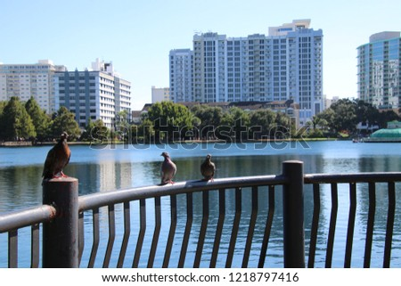 Foreground background perspective photography of pigeon bird perched on black metal railing over turquoise blue reflecting water of downtown lake.  #1218797416