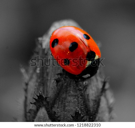 Cute Lady Bird #1218822310
