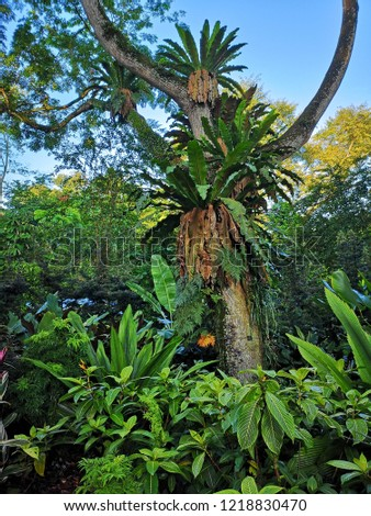 Rain forest trees and plants #1218830470