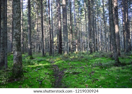 Deep dark mossy forest trees view. Autumn mossy forest trees background. Forest trees moss scene. Wilderness forest trees landscape #1219030924