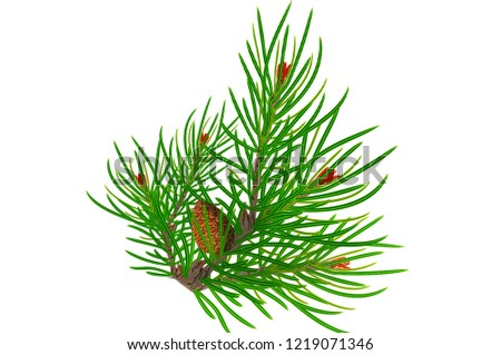 Christmas composition made of fir branches and pine cones on white background #1219071346