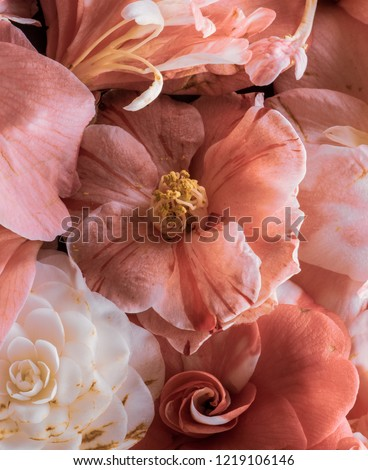Fine art still life floral pastel color blossom macro of a collage bouquet of pink white yellow blooming camellia blossoms with detailed texture seen from the top