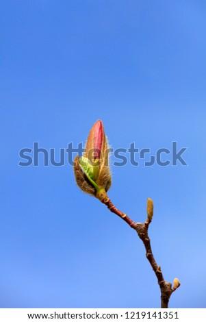 Magnolia flowers in the wild #1219141351