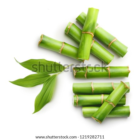 Branches of bamboo isolated on white background #1219282711