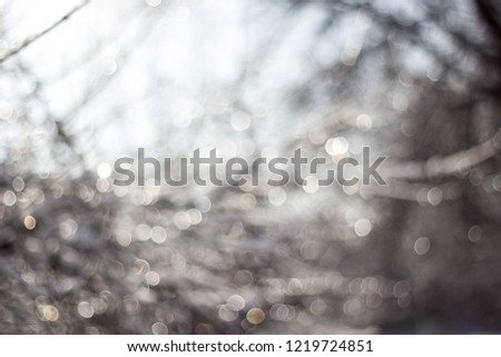 winter snow blurred background in city park, snowfall in forest, tree branches and bushes covered with snow, abstract snowflakes in blur. #1219724851