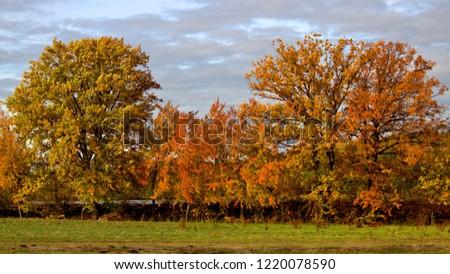 foliage trees at autumn #1220078590
