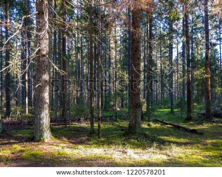 Dark forest trees background. Forest trees sunlight view. Autumn forest trees landscape. Wilderness forest trees scene #1220578201