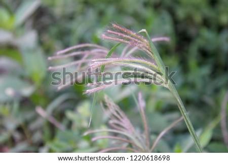 beautiful grass flower in the garden #1220618698
