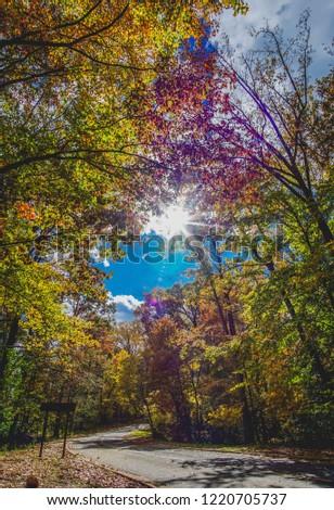 sun streaming through fall trees #1220705737