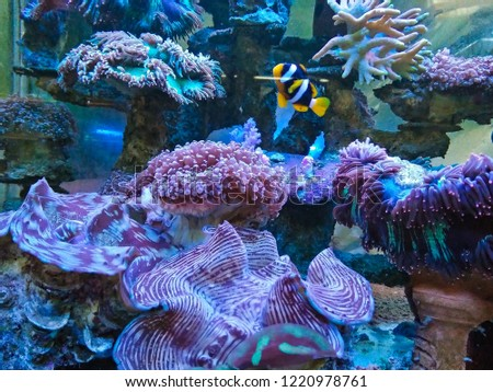 Coral reefs are growing in the aquarium due to the rearing. #1220978761