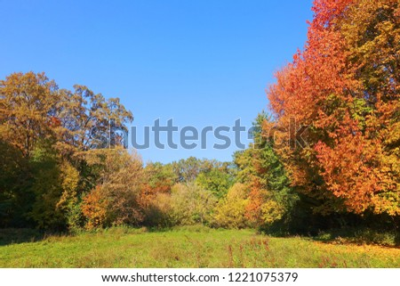 Autumn landscape with colorful foliage of  trees and blue sky in the forest. Natural impressionism. #1221075379