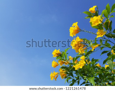 Flower background. , Yellow flowers with sky. #1221261478