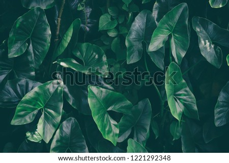 tropical leaves, dark green foliage, nature background #1221292348