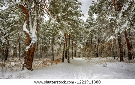 winter landscape. snowy forest. snow covered trees. coldly. #1221911380