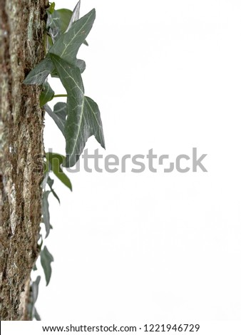 Ivy Growing on a Tree in Deep Snow #1221946729