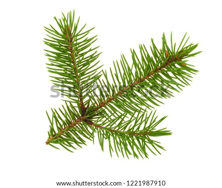 Fir tree twigh isolated on white #1221987910