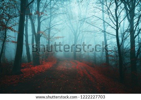 Dark horror path in moody foggy forest #1222227703