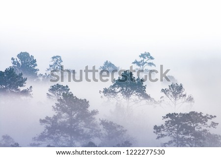 silhouette of tropical forest covered in morning fog. misty jungles on Thai mountain. white water vapour covered trees only outline can be seen. #1222277530