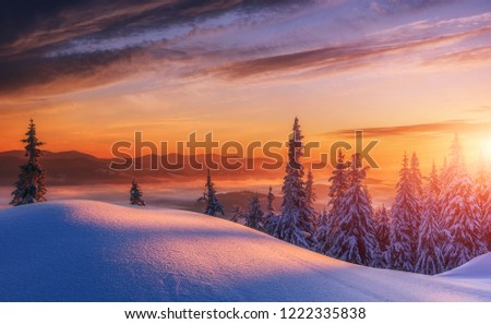 Amazing Alpine Highlands in winter, with colorful dramatic sky during sunset. Breathtaking wintry Landscape with snow-covered pine trees glowing violet and pink colors, under sunlit. Merry Christmas #1222335838