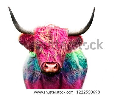 highland cow colorful dyed hair, punk concept #1222550698