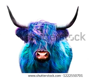 highland cow colorful dyed hair, punk concept #1222550701