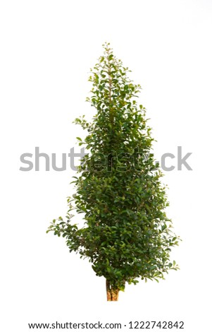 Tree isolated on white background. Ornamental plants isolated on white background.House plants concept. #1222742842