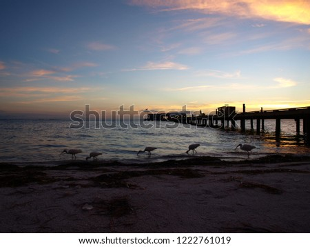 Natural Anna Maria Island Florida #1222761019