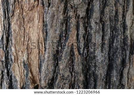 Dark brown old tree bark texture background #1223206966