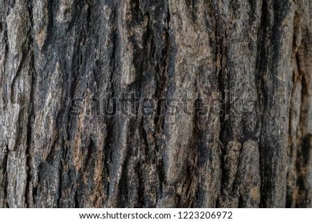 Dark brown old tree bark texture background #1223206972