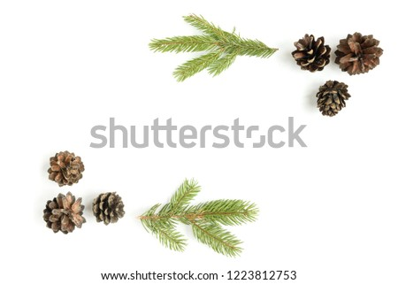 Pine cone on a white background #1223812753