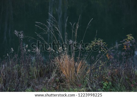 Plant and grass in front of dark green Isar water  #1223998225