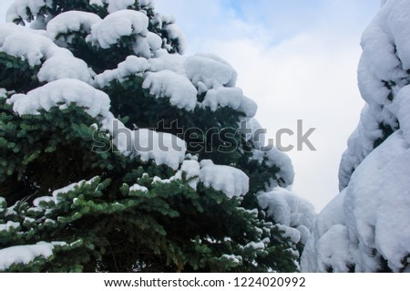 Green fluffy fir tree in the snow #1224020992