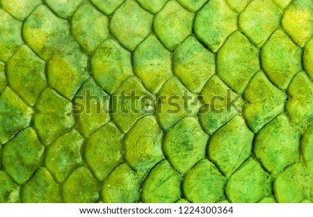 Skin reptile green crocodile skin texture snake background close-up.  Fish Scale Background Texture #1224300364