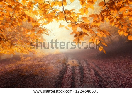 path in the forest in autumn #1224648595