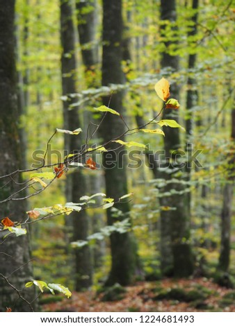 autumn leaf forest #1224681493