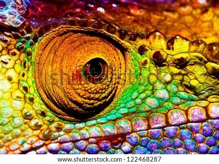Photo of colorful reptilian eye, closeup head part of chameleon, multicolor scaly skin of lizard, african animal, beautiful exotic iguana, wild nature, fauna of rainforest #122468287