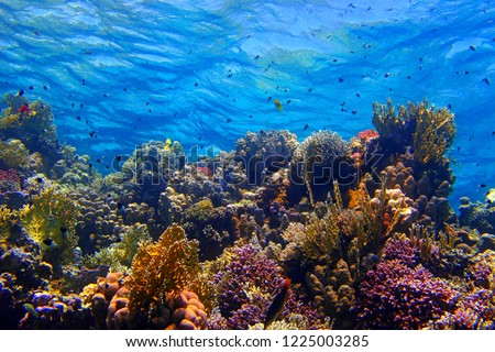 Colorful tropical coral reef with fish and blue water. Underwater ecosystem in the shallow sea. Fish, corals and water surface with waves. Scuba diving with marine wildlife. #1225003285
