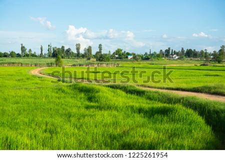 Road in field, green farm land, landscape #1225261954