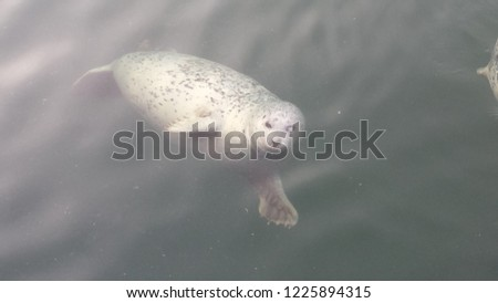 One Eyed Seal #1225894315