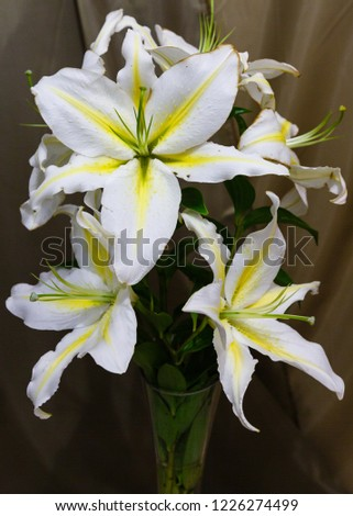 Lily (disambiguation) Lilies Lilium (band). Lilium is a genus of herbaceous flowering plants growing from bulbs #1226274499