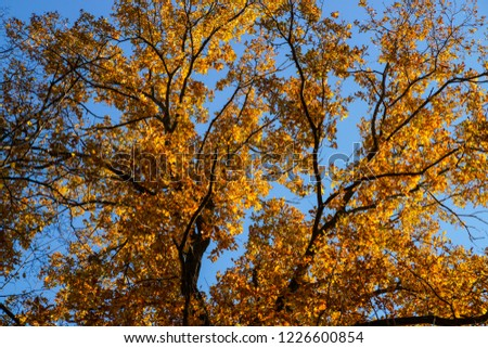 colorful autumn foliage background #1226600854
