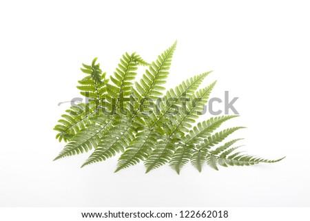 Fern leaves #122662018