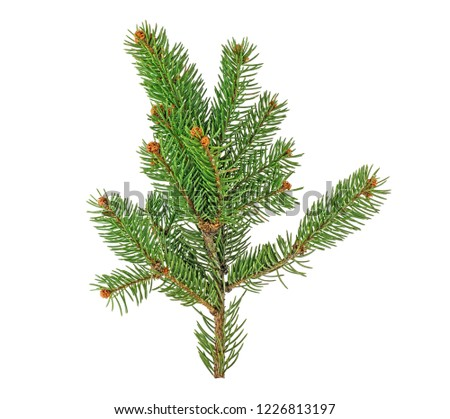 Green fir branch for christmas, isolated on white background. #1226813197