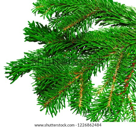 Fir branch isolated on white background #1226862484