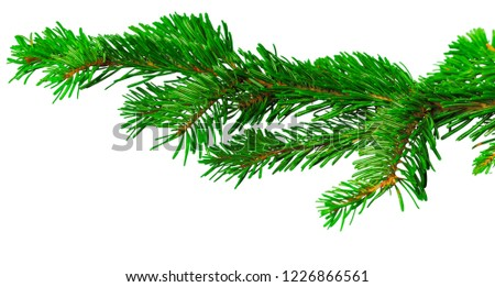 Fir branch isolated on white background #1226866561